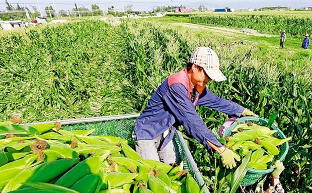 """让资源好牌打出产业王牌!东方农业高质量发展""""快马加鞭"""""""